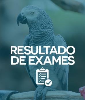 Resultado de exames